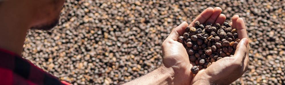 campesino con cafe en las manos